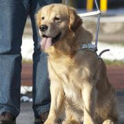 detrazione cane guida