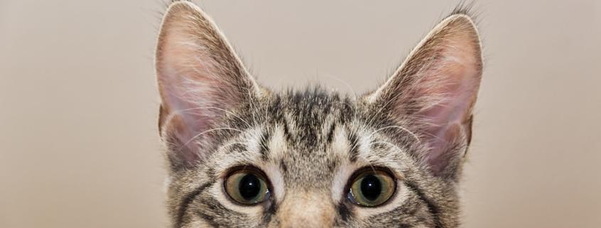 Detrazione spese veterinarie